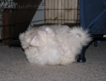 Roly Poly Ball of Fur